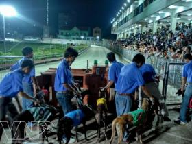 Greyhound Race Track & Night Racing